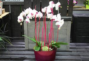 JARDINIERE D'ORCHIDEES DECO