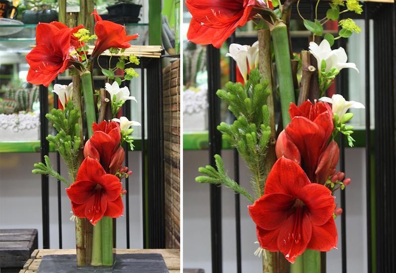 2oc composition amaryllis par votre fleuriste lorient for Amaryllis taille